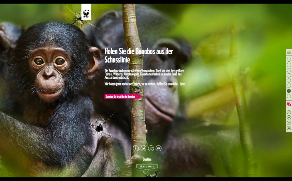 Die Bonobos sind in Gefahr! - WWF Deutschland Kopie 3